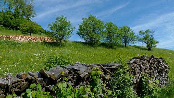 Holzstapel neben dem Sträßchen auf Rabenreith