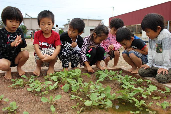 畑での栽培活動
