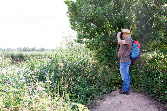 Wolfgang beobachten sie Lachmöven Kolonie  (Foto: B. Budig)