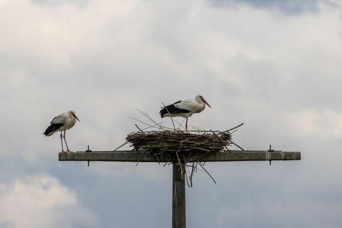 Storchenpaar auf der Nisthilfe am 29.04.20 (Foto: B. Budig)