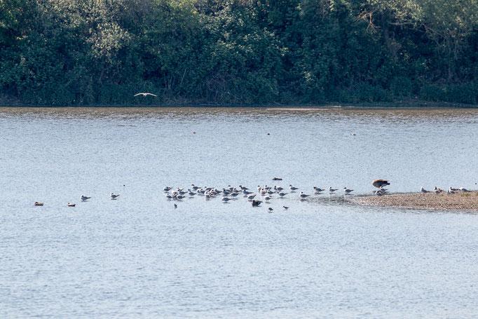 Rastende Vogelgruppe (Foto: B. Budig)