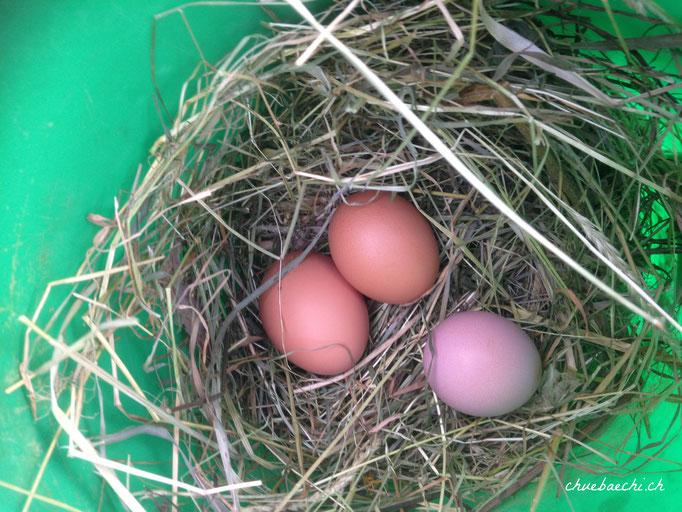 Die ersten gelegten Eier