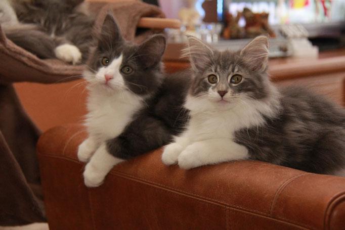 Kittens van Carmen