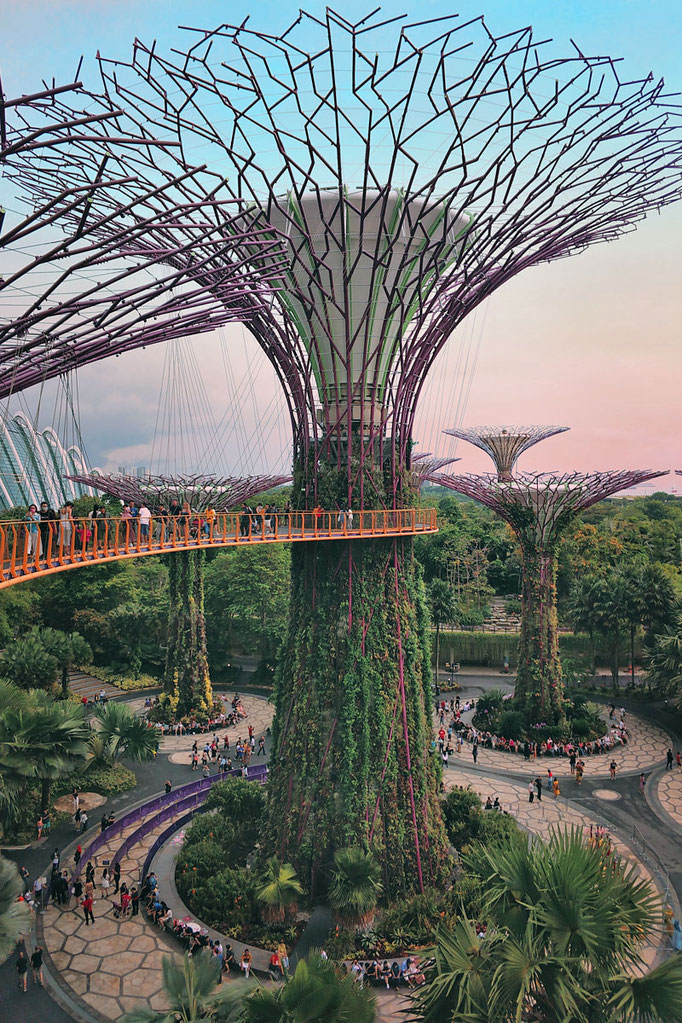 Supertree Grove | Gardens by the Bay - Best Things to do and Places to see in Singapore's Wonder Park
