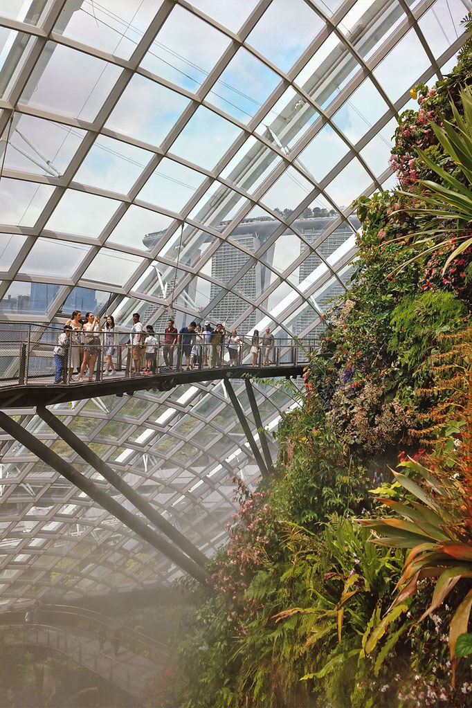 Treetop Walk at Cloud Forest| Gardens by the Bay - Best Things to do and Places to see in Singapore's Wonder Park