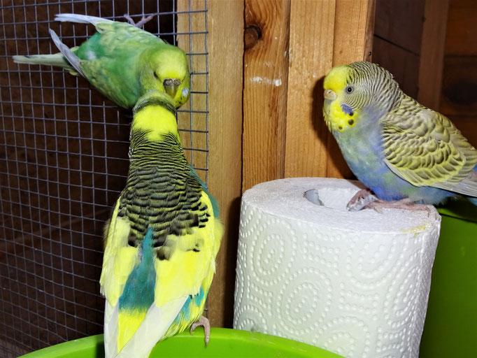 Stolchi, Feli und Tini