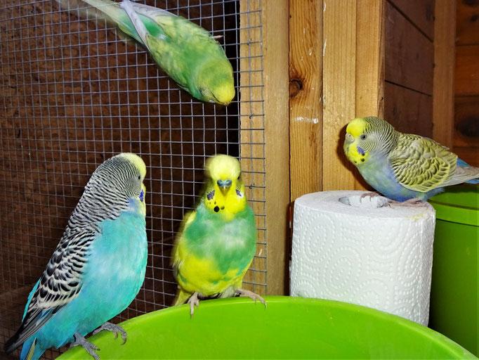 Jordy, Strolchi, Feli und Tini