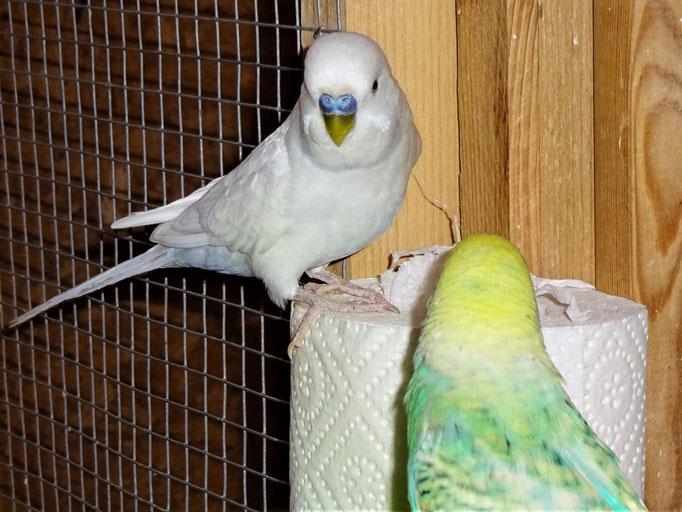 Vergil und Anni
