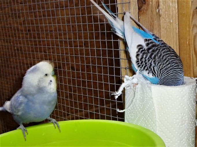 Monty und Joline