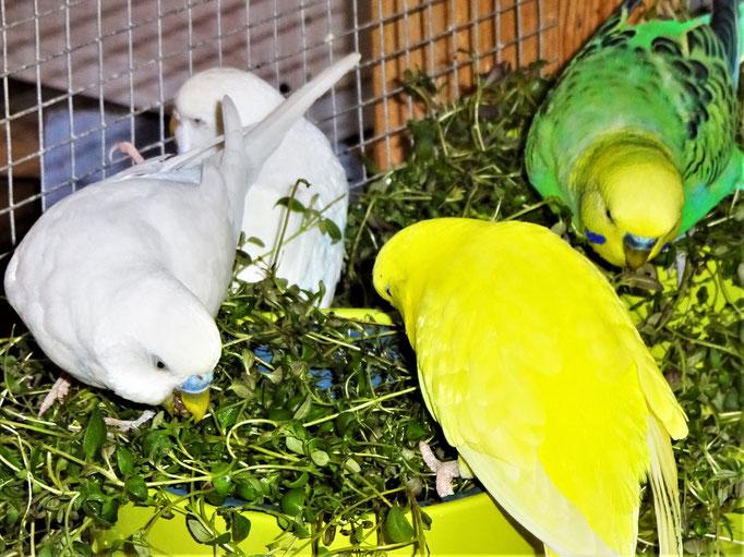 Vergil, Cleo, Pepe und Smarty