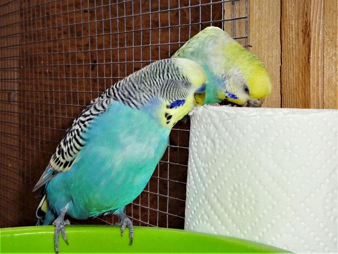 Jordy und Anni