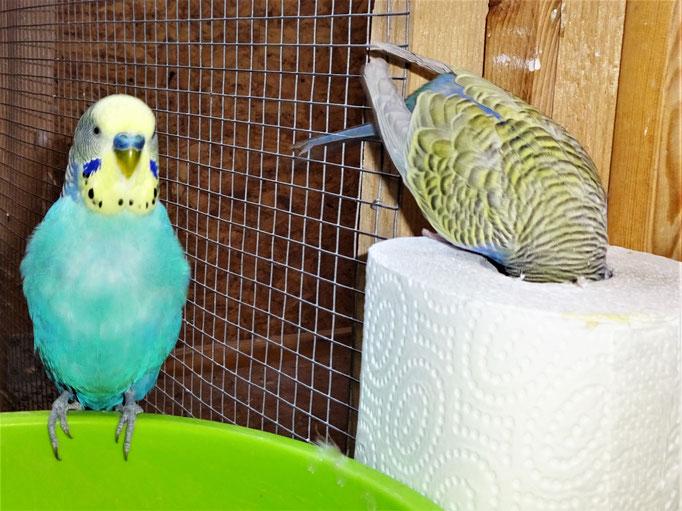 Jordy und Tini