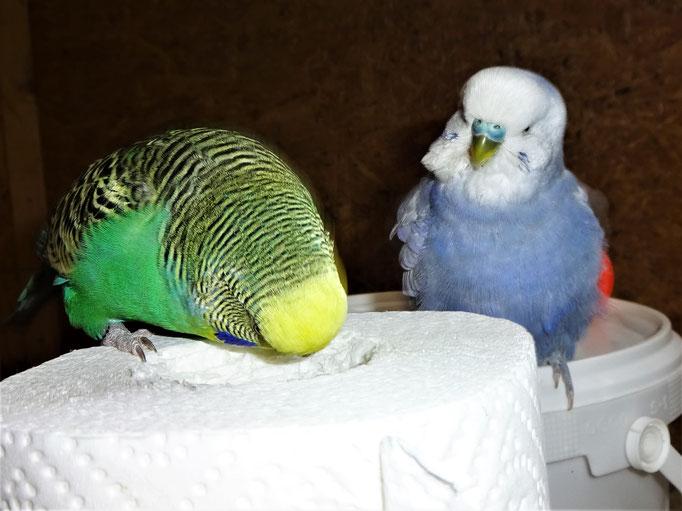 Lotte und Monty
