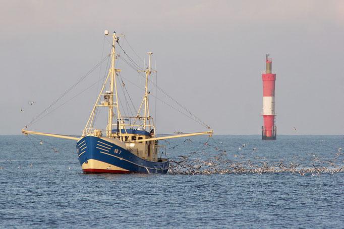 Baumkurre und Möwen (Larus spp.), Fish trawler and gulls © Thorsten Krüger