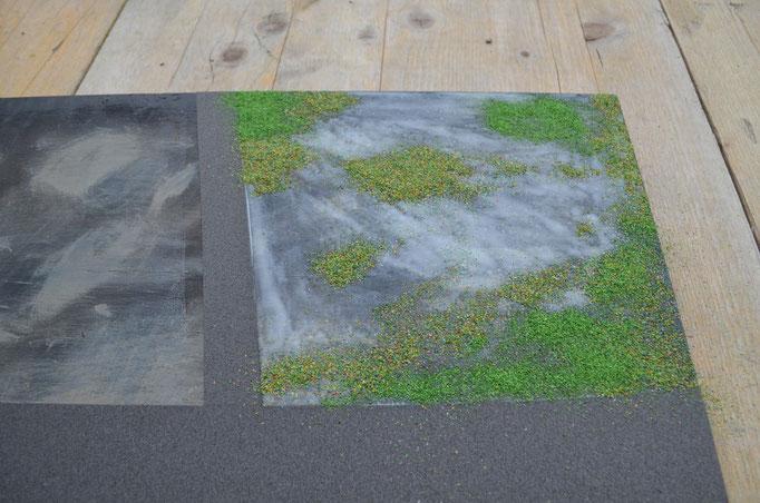 Verschiedene Modellbau-Rasen-Arten werden fleckig aufgeträufelt...