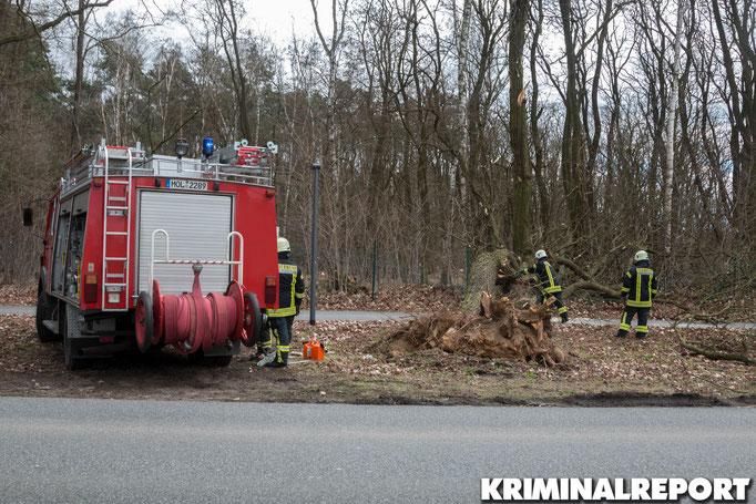 In Waldesruh stürzte ebenfalls ein Baum um.|Foto: Christopher Sebastian Harms