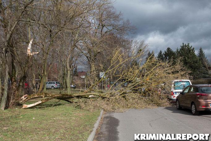 In der Jänschwalder Straße in Hellersdorf stürzte ein Baum um.|Foto:Christopher Sebastian Harms