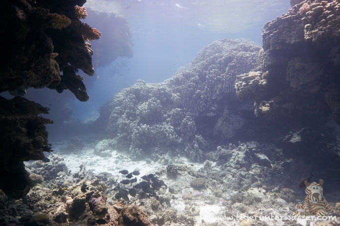 Umm El Khararim - St.Johnes - Red Sea / Vita Xplorer
