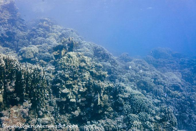 Umm Sail - Marsa Alam - Red Sea - Aquarius Diving Club