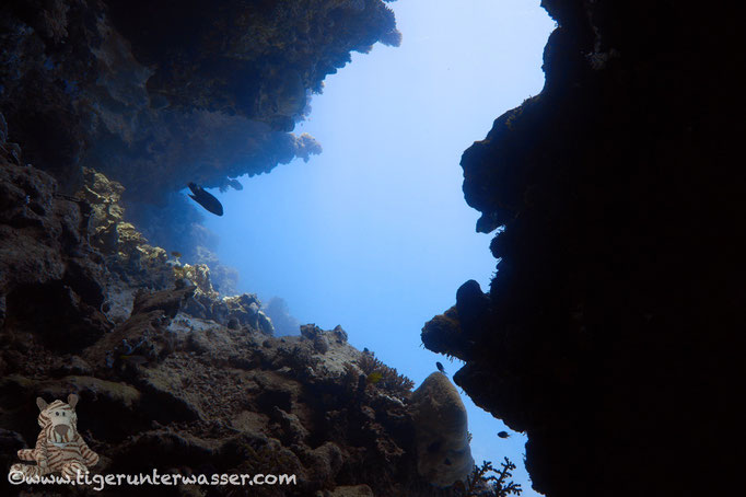 Umm Kamar / Hurghada - Red Sea / Aquarius Diving Club