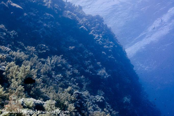 Elphinstone / Red Sea / Aquarius Diving Club