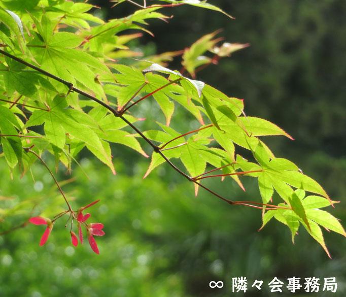∞ 季節の草花 隣々会事務局