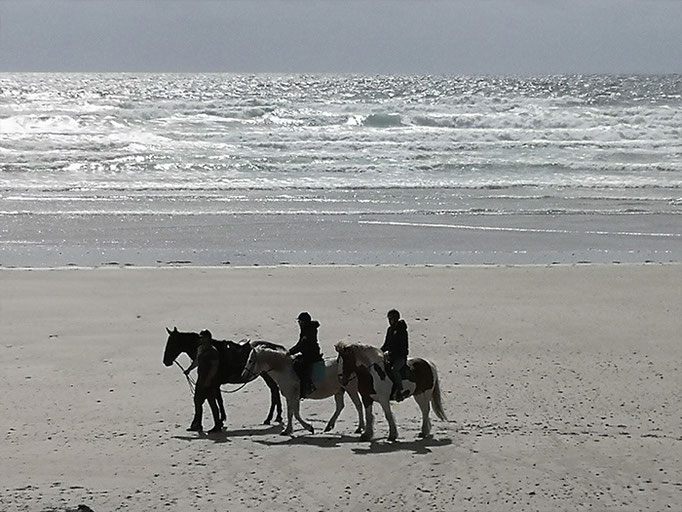 Reiten am Strand mit Begleitung