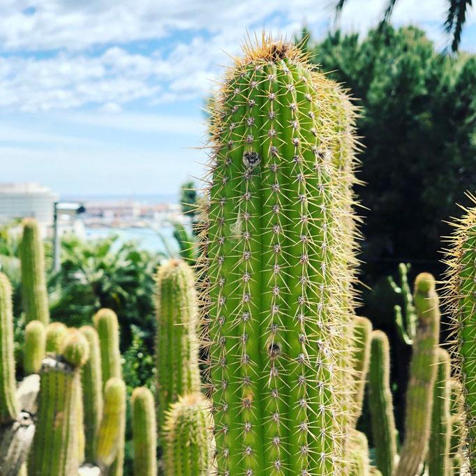 Jardins de Mossèn Costa i Llobera in Barcelona – by kamikatzedesign