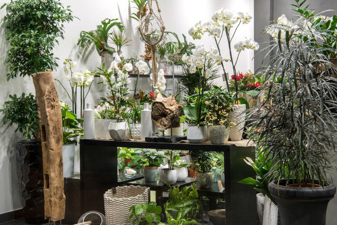 Une vitrine de la boutique florale Sabrina Maurel