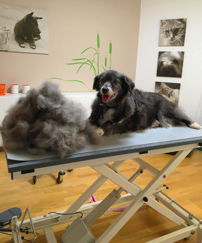 Border Collie-Mix, Fellpflege - Hundesalon Plisch & Plum