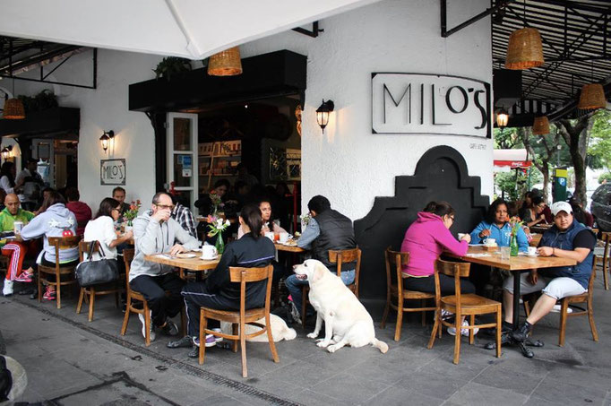 Lugares Pet Friendly en Condesa, Milos, Condesa