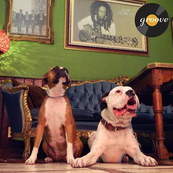 Lugares Pet Friendly en Condesa, Groove, Condesa