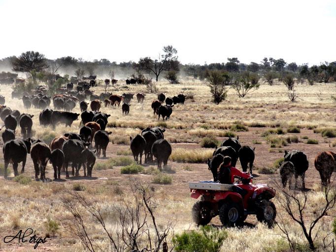 Australie - Outback