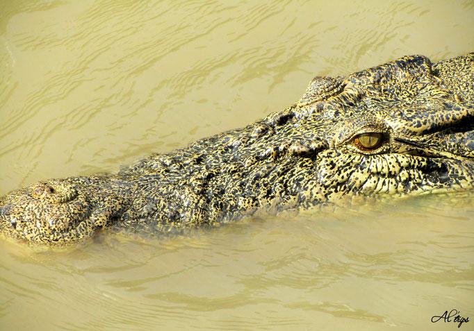 Australie - Parc National de Liechfield