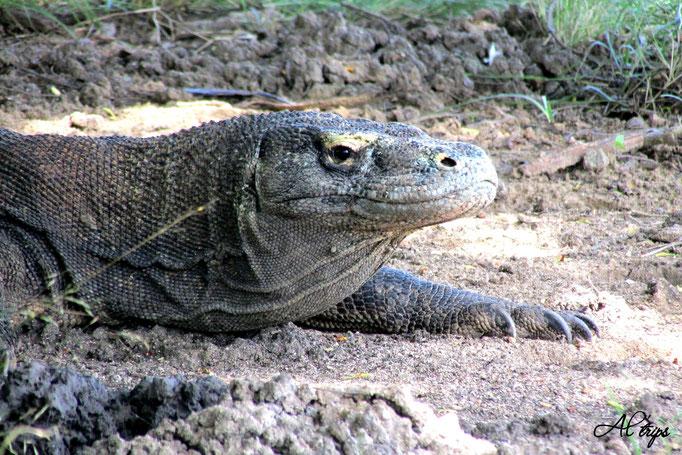 Indonésie - Komodo National Park