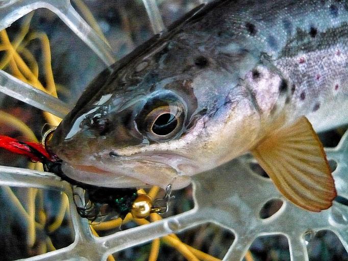 Fliegenfischerschule-Hessen // Fliegenfischen lernen // Wurfkurse // Bindekurse // Guiding