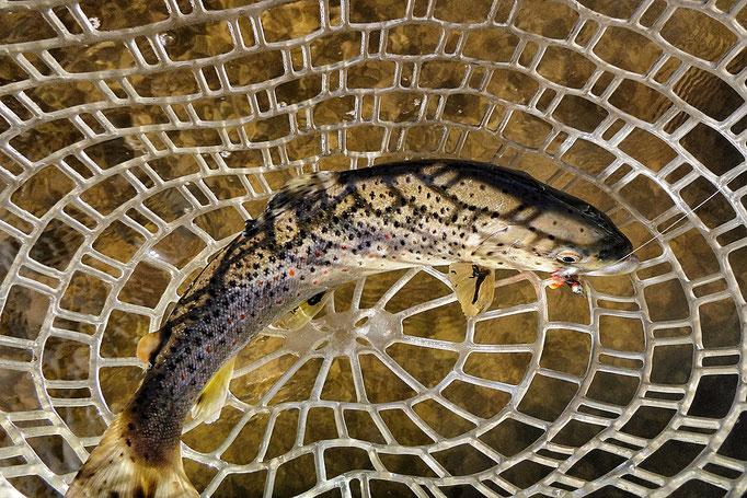 Ganz einfach Fliegenfischen lernen in Deutschland mit der Fliegenfischerschule-Hessen.