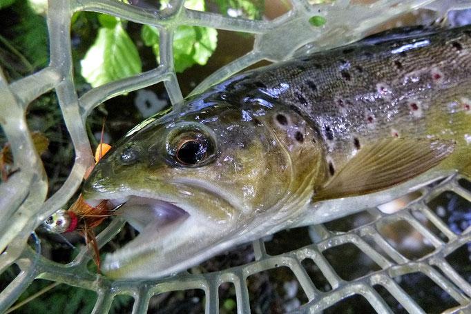 Finde das pure Abenteuer mitten in Deutschland beim Fliegenfischen mit der Fliegenfischerschule-Hessen.