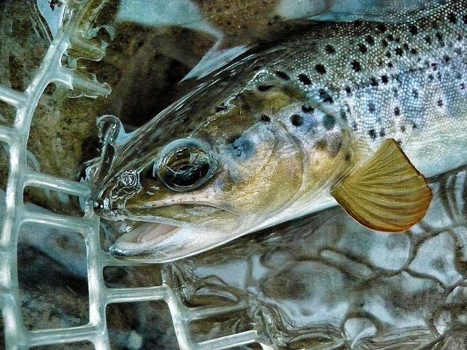 Fliegenfischen lernen / Kurse / Kurzurlaub / Reisen / Fliegenfischerschule / Deutschland