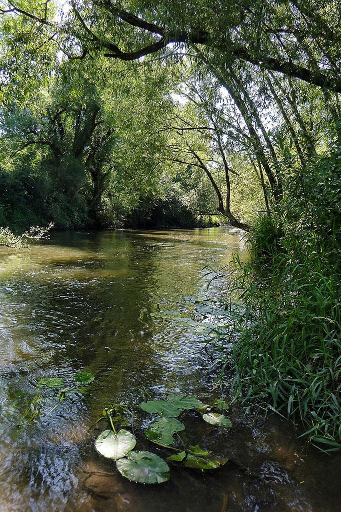 Kurse für Einsteiger und fortgeschrittene Fliegenfischer bei der Fliegenfischerschule-Hessen