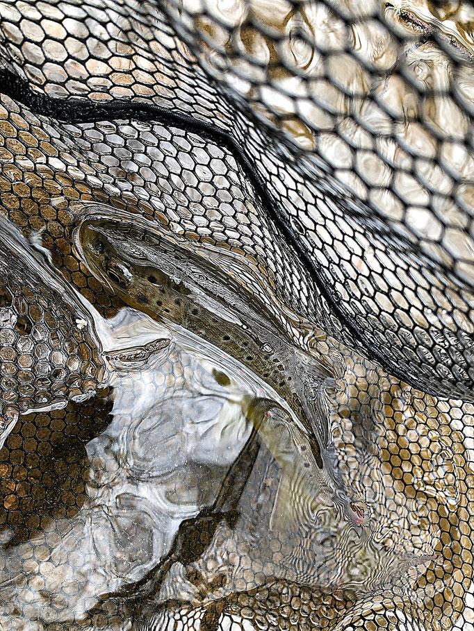 Fliegenfischen lernen in Deutschland / Wurfkurs / Fliegenfischerschule-Hessen