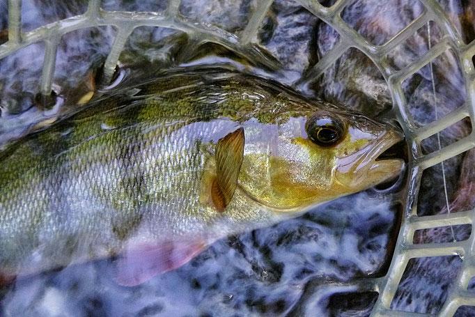 Fliegenfischen Anfängerkurse Guiding Kurzurlaub Deutschland Fliegenfischerschule-Hessen