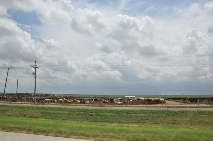Texas - Fattorie