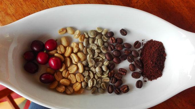 Kafferegion Kaffeeprozess Kolumbien Reise individuell