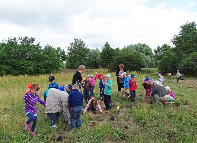 Kinder der KITA Friedrich Fröbel beim Pflanzen von Wildstauden. Foto: Helmut Gille