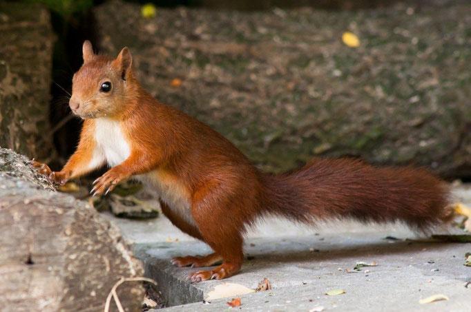 15 Eichhörnchen