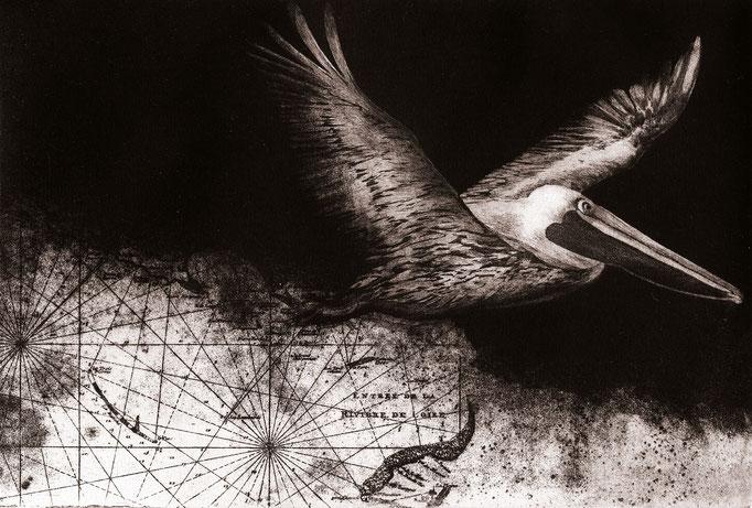 """Isabelle Panaud - gravure - """"le pélican"""""""