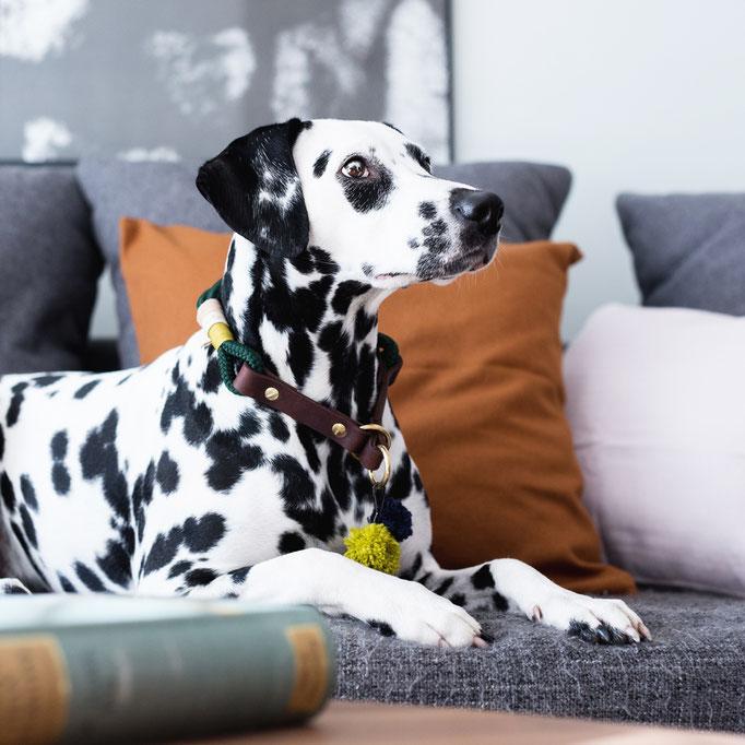 Hundehalsband Dalmatiner
