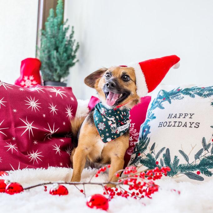 Weihnachtliches Hundehalstuch