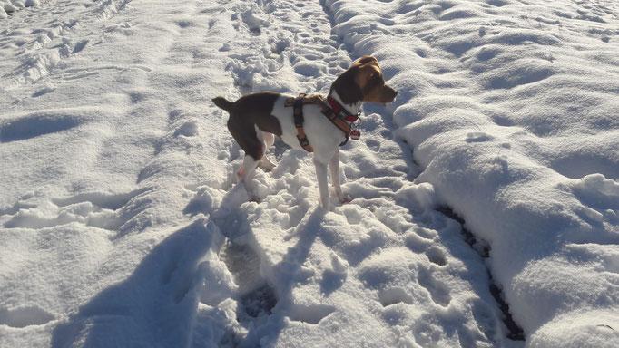 12.12.2020 - Eve und ihr erster Schnee